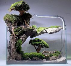 If in case you have achieved the right planning to your new aquarium, you have already bought, or in any other case acquired, every thing it's essenti. Aquarium Garden, Aquarium Landscape, Tropical Fish Aquarium, Nature Aquarium, Aquarium Fish Tank, Water Terrarium, Aquarium Terrarium, Terrarium Plants, Aquarium Design