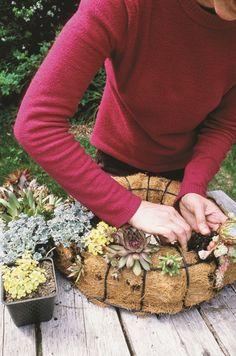 Semper-viva Succulent Wreath - Garden Therapy