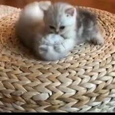 Source by videos wallpaper cat cat memes cat videos cat memes cat quotes cats cats pictures cats videos Cute Baby Cats, Funny Cute Cats, Cute Little Animals, Cute Cats And Kittens, Cute Funny Animals, Kittens Cutest, Cute Puppies, Cute Dogs, Gato Gif