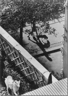 André Kertész - The White Horse, New York,1962