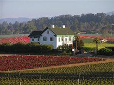 Flora Vista Inn in La Selva Beach, CA sits on a field of flowers and strawberry fields
