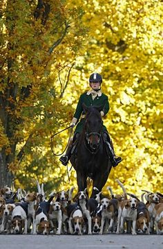 whipping! :-) Fox Hunting