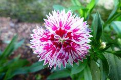 Flores da minha terra