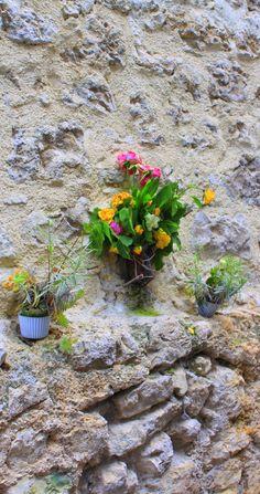 Flowers in Ciociaria, Italy