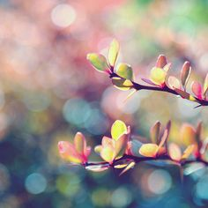 pastels, leaves, branch, colorful, delicate, nature, cute