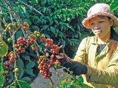 Tìm lối ra cho kinh tế Việt Nam - Kỳ 10: Xây dựng thương hiệu toàn cầu