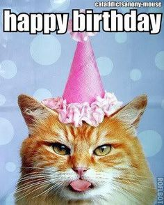 Birthday Kitty Happy With Cats Images