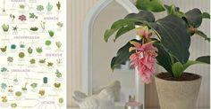 66 imágenes con preciosas plantas de interior (Inspiración 100%)
