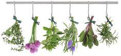Making Herb Gardens at Home #gardens #herbs