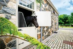 Martha Stewart's horse Rutger enjoying a beautiful day.