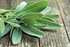 Sage is one of the best natural remedy to darken grey hair. A tea infusion made with leaves and rubbed into the scalp is all you need to do to cover any grey strands. Here's how to use sage tea to darken grey hair Salvia, Natural Mosquito Repellent Plants, Sage Benefits, Health Benefits, Grey Hair Care, Gray Hair, White Hair, Sage Uses, How To Darken Hair