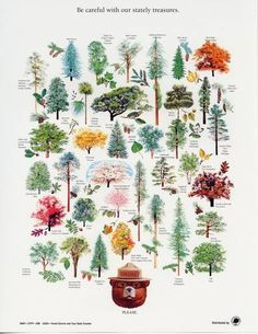A Collection Of Smokey Bear& Best Nature Posters. The Smokey Bear Educational Nature Poster Series Tree Identification, Smokey The Bears, Nature Posters, Alphabet Print, Forest Service, Motif Floral, Trees And Shrubs, Cool Posters, Amazing Nature