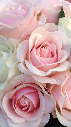 (notitle) - Sea of Flowers -