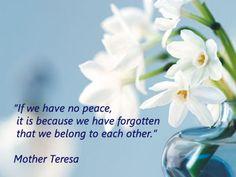 mother teresa peace Human Rights Quotes, Art Quotes, Inspirational Quotes, Mother Teresa Quotes, Other Mothers, Spiritual Quotes, Inspire Me, Peace, Words