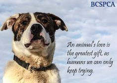Its time to print our holiday cards! We are looking for feedback on what you would like to see online and in store this year. Leave your comments and suggestions below and let us know if you have any favourites! See what else is in store at www.shop.spca.bc.ca