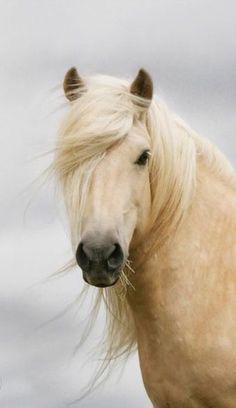 Connemara pony?