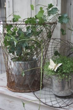 love the wire baskets. Wire Basket Decor, Basket Decoration, Wire Baskets, Vintage Outdoor Decor, Vintage Garden Decor, Porches, Ivy House, Green Life, Outdoor Plants