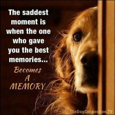 Mooie woorden over honden - Bij Zus Animals And Pets, Cute Animals, Baby Animals, Wild Animals, Pet Sitter, Pet Loss Grief, Dog Quotes Love, Dog Heaven Quotes, Funny Pet Quotes