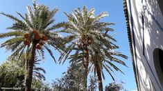 Desert Tour, The Dunes, Marrakesh, Day Trips, Palm Trees, Morocco, The Good Place, Palace, Tourism
