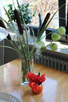 이미지 출처 http://m3.paperblog.com/i/103/1033693/papstei-gomphocarpus-physocarpus-L-TPINod.jpeg