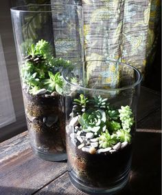 Maybe a use for your large glass vase from Christmas (bellewether: Succulent Terrariums)