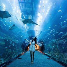 15 Best Ideas for travel goals dubai Dubai Travel, New Travel, Travel Goals, Abu Dhabi, Travel Pictures, Travel Photos, Aquarium Pictures, Dubai Aquarium, Dubai City