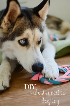 DIY Indestructible Doy Toy made from old t-shirts! #toy dog #searchub