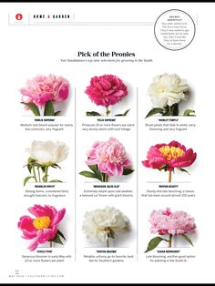 NC grown peonies featured in Southern Living mag!