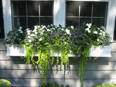 Pretty Summer window box - White Splash Coleus, Torenia Prurple Moon, White Impatiens and Sweet Potato Vine Window Box Plants, Fall Window Boxes, Window Box Flowers, Balcony Flowers, Window Planter Boxes, Planter Ideas, Window Sill, Potted Flowers, Flower Plants