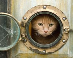 Porthole Windows for your Home and pets. I don't have a cat, but if I did, I'd have this in my house.