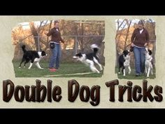 Double dog tricks, canine freestyle doggie dancing, Pam's Dog Academy www.pamsdogtraining.com Pamela Johnson Brace tricks... Agility and dog training, too...
