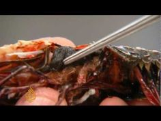 Gulf of Mexico seafood deformities alarm scientists -- thanks a lot BP. Skip your commercials and spin and pay up. Oh, and as for pipeline from Canada to the Gulf ... I'll pass.