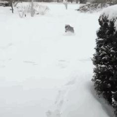 My 14 year-old mini schnauzer loves a snow day! http://ift.tt/2ieXs1g