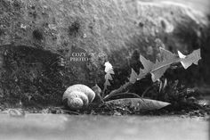 Animal Print, Snail Print, Animal Wall Art, Nature Print, Animal Decor, Home Decor, Inst Download, Shell print, Office Decor by cozyphoto on Etsy Nature Prints, Art Nature, Animal Decor, Snail, Office Decor, Black And White, Wall Art, Animals, Outdoor