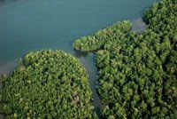 Costa baja bordeada por manglares al sur de Buenaventura.