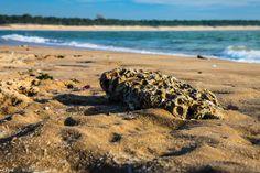 un galet aux sculptures bizarre sur la plage