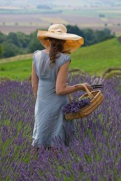 This could be Savvy harvesting her lavender in A Taste of Sauvignon