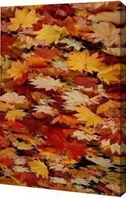Deck your walls seasonally with trendy, popular and stylish  seasonal wall décor.  It is easy to  spruce up living rooms, kitchens, bathrooms and especially bedrooms for #Spring,  #Summer, #Fall and #Winter by adding some seasonal wall art décor.  Simply the easiest way to #decorate your  #home each season.      red orange yellow rustic canvas art