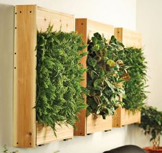 Hidden reservoirs make these wall planters easy to water.