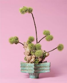 Ann Shelton-Arranged Botanical Abortifacients Into Stunning Floral Designs in a Timely Show About a Woman's Right to Control Her Fertility Creative Background, Abortion Debate, Ikebana, Fertility, Botany, Art World, Japanese Art, Female Bodies, Floral Arrangements