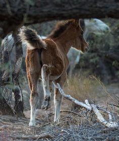 Salt River wild Horses-Advocates
