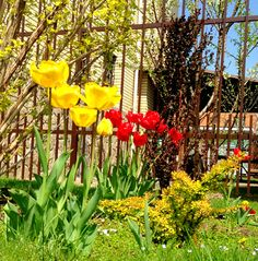 Зина и весна!