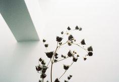 Atelier flowers.