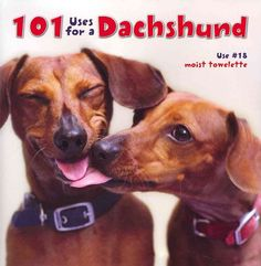Dachshunds have a knack for helping out any way they can. In their desire to please, they are ready, willing and able to perform a myriad of tasks useful to their owners. Whether you need a door stop,
