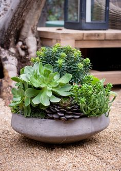 Mobile Landscapes by Lila B. She's so talented! Look at the use of succulent with different hight in this simple concrete shallow planter. Genius!