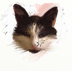 Sunday Sketch - Cat Face