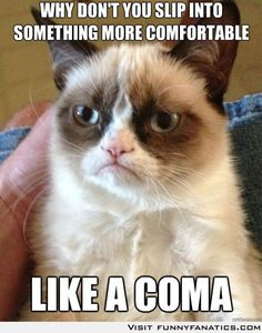 This is my new favorite grumpy cat.