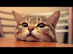 Most Innocent Cats Thats You Never Seen Before- | Cat Lovers Special
