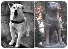 The dog Hachiko, the Akita breed - what inspired the movie 'Hachi' - is considered a hero in Japan His story is exciting: even 10 years after the death of its owner, Hidesaburo Ueno, the dog was still waiting for him in train station, with the hope that he would come back from work. In the 30s, the newspaper Asahi Shimbun reported the daily ritual dog and thus he became famous throughout the country.