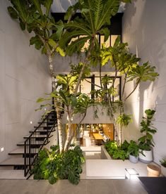 Gallery of Courtyard Pattanakarn Residence / baan puripuri - 23 Tile Steps, Passive Design, Modern Tropical, Living Environment, Glass Door, Contemporary Design, Interior And Exterior, Townhouse, Greenery